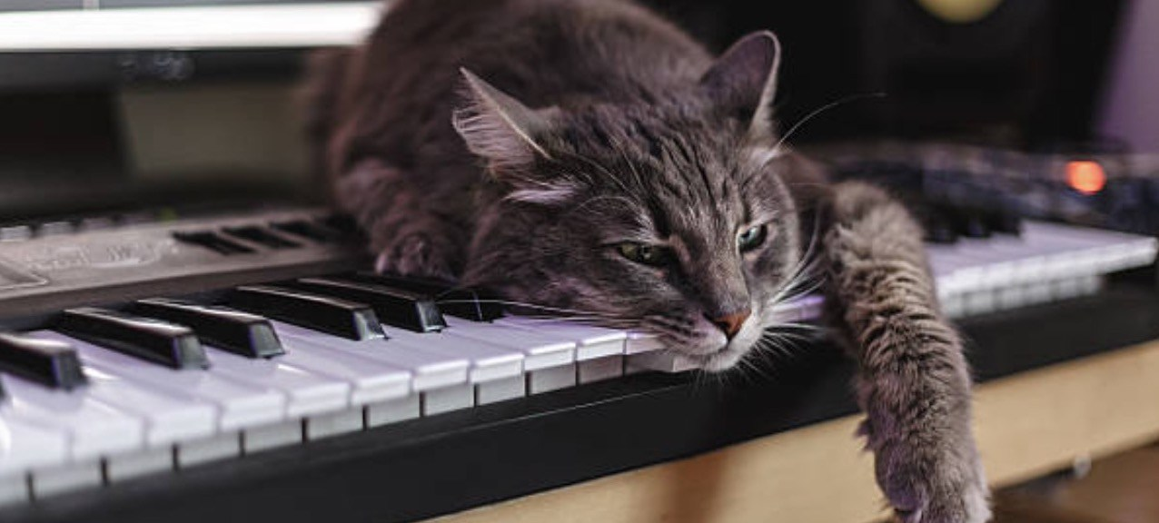 Grappige foto met kat aan de digitale piano