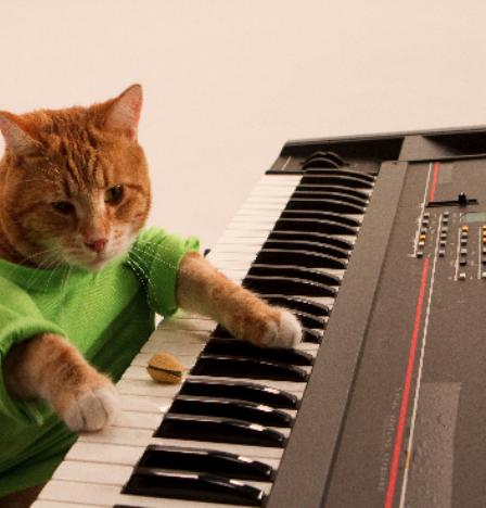 Image drôle avec chat au piano
